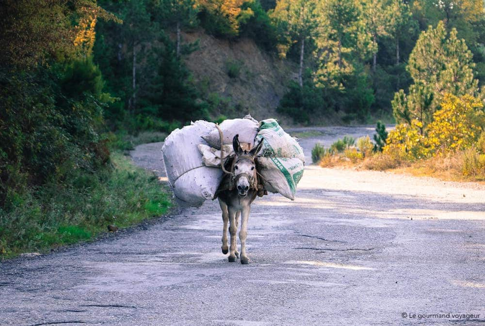 img_1302-albanie-le-gourmand-voyageur