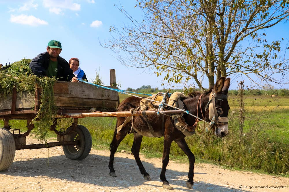 img_1870-albanie-le-gourmand-voyageur