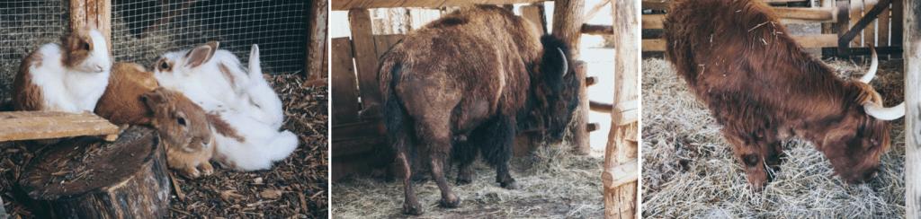 Blog Le Gourmand Voyageur - que faire lors d'un week-end Jura- La ferme du Hérisson